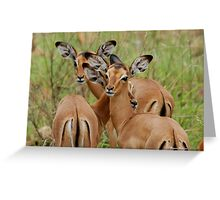 ARE WE SAFE HERE - BABY  IMPALA – Aepyceros melampus melampus - *ROOIBOK* Greeting Card