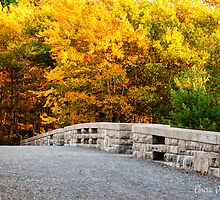 The Glory of Fall at Acadia by Anita Pollak