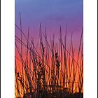 sunset through reeds by kathybellingham