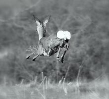 Leaping deer (Animals) by Steve Parsons
