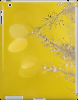 Yellow Sparkles by KUJO-Photo