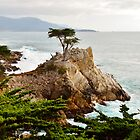 Lone Cypress by BarbaraSnyder