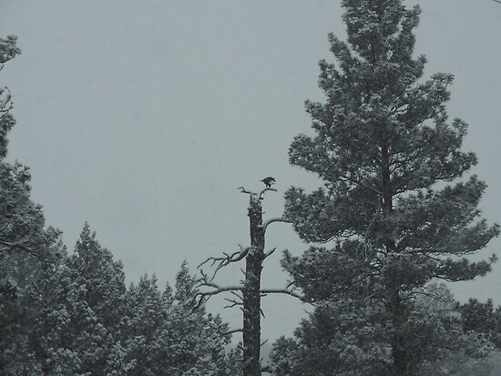 Eagle Perch by © Betty E Duncan ~ Blue Mountain Blessings Photography