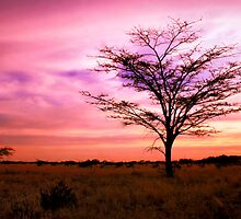 Twilight On The Savanna  by areyarey