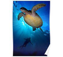 Turtle Diver Poster