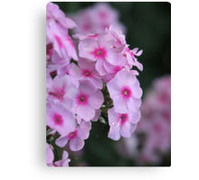 Perfumed Pink Canvas Print