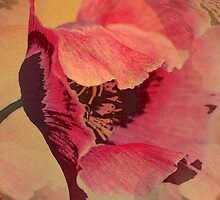Summer Poppy, Mixed media design by walstraasart