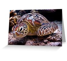 Turtle of Paradise Greeting Card