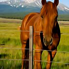 Horse with fence by Michael Andersen