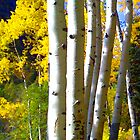Aspen Grove Abstract by Michael Andersen