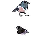 juncos by Ashley Peppenger