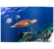 Sea Turtle and Entourage Poster