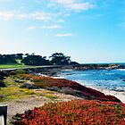 17 Mile Drive Shoreline by BarbaraSnyder