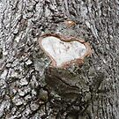 I HEART You Tree by WildestArt