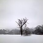 Lone winter tree by William Bovington