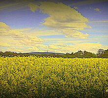 Rape Seed by thepicturedrome