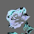 Single Rose II by Annie Zeno