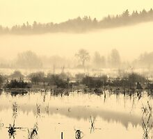 Flooded Wetlands by Randy Richards