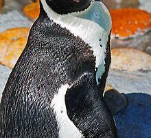 Posing Penguin by Darrick Kuykendall