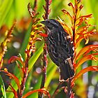 Bird on Flowers by Darrick Kuykendall