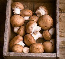 Mushrooms by Edward Fielding