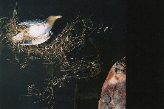 on death by Isabela M. Lamuño