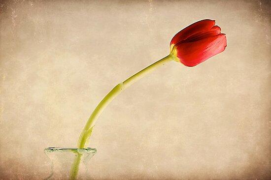 Simply Red  by fernblacker