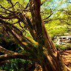 Cascade Dream by Drew Walker