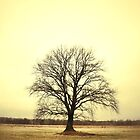 Solo Tree by emado