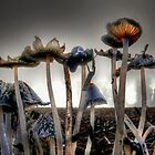 Coprinus lagopus by Charles &amp; Patricia   Harkins ~ Picture Oregon