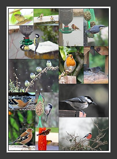 A selection of small birds by missmoneypenny
