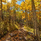 Ben Tyler Autumn Trail by Reese Ferrier