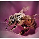 Collecting the Pollen   by Dennis Stewart