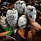 Coprinus comatus by Charles &amp; Patricia   Harkins ~ Picture Oregon