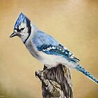 Blue Jay by lanadi