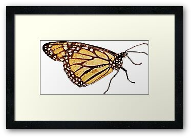 Monarch Butterfly Print by DreamByDay