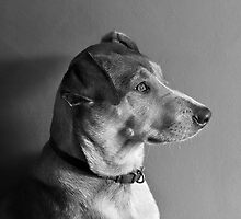 Model Dog by Alex Preiss