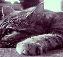 Kitty Cat by Stevie B