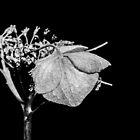 dark flowers by ronnyvan