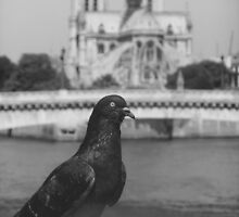 Le Pigeon of Notre Dame by jlv-