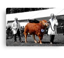 Northumberland Show 2012 Canvas Print