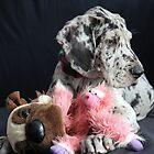 Great Dane Puppy in studio by sherele