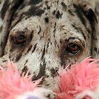 Great Dane Puppy Portrait by sherele