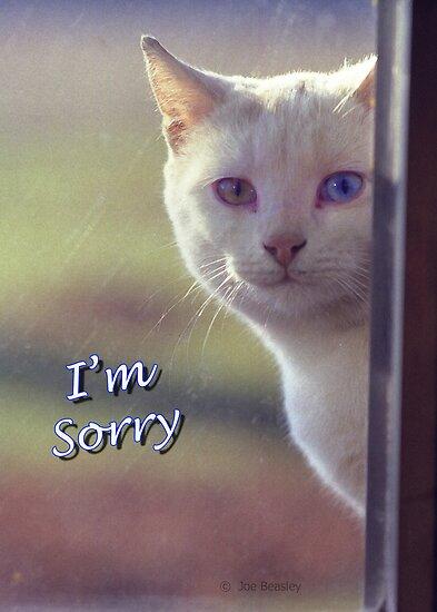 White Cat I'm S...