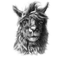 Cute Llama G2013-068 by schukinart