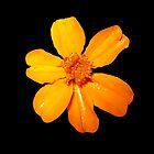 Orange Yellow Flower Print On Black by DreamByDay