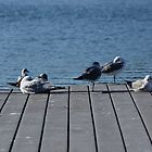 Seagulls Chllin by Scott Dovey