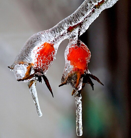 Frozen Berries by Rose Landry