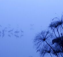 Common crane (Grus grus) Silhouetted at dawn. by PhotoStock-Isra