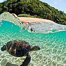 Sea turtle caught in Clear water by AstroNance